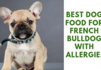 Best Food For French Bulldog With Allergies