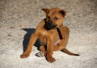 7 Ways to Get Rid of Fleas on Dogs