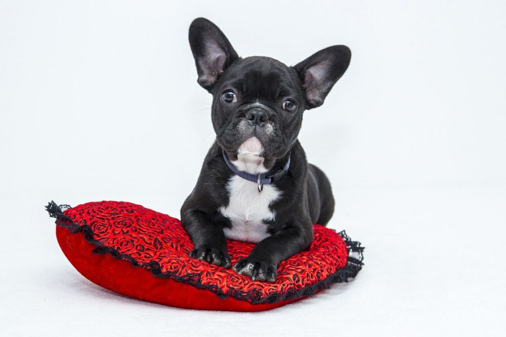 Best Dog Food for French Bulldog With Allergies