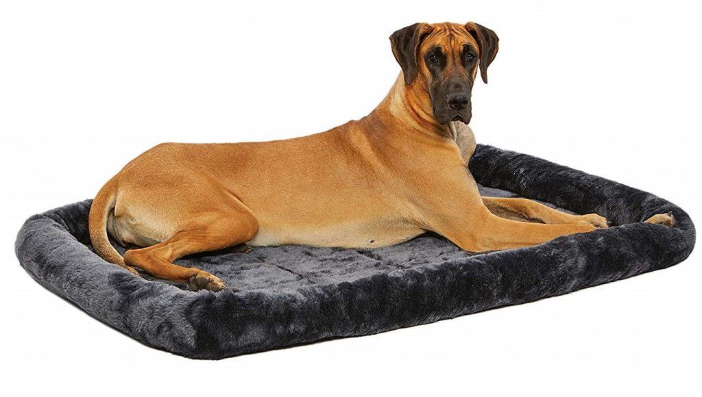 great dane lying on bed