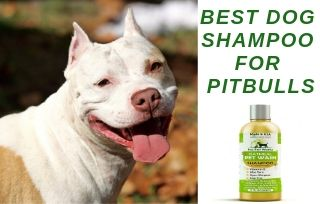 Shampoo For Pitbull Dog