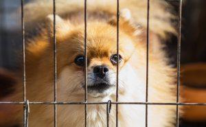 Puppy behind crate