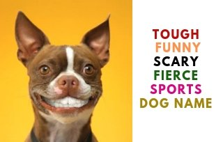 Tough, Funny, Scary, Fierce, Sports Dog Name