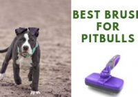 Best Brush For Pitbull