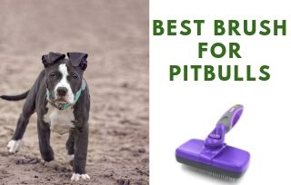 What are the best brush for pitbull dog