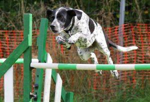 dog jumping training