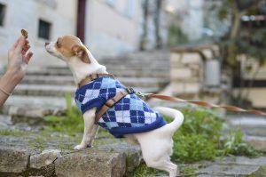 Puppy training treat