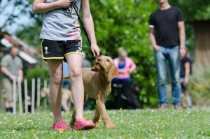 Dog training with harness