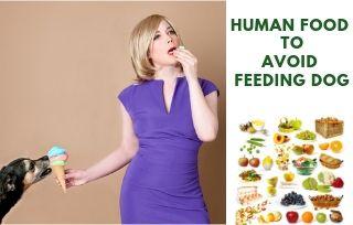 Dangerous Human Food For Dog