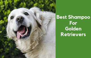 Good shampoo for golden retrievers