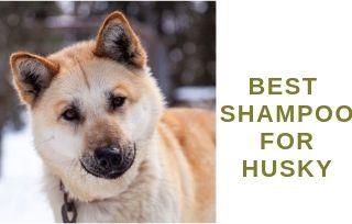Shampoo For Huskies