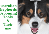 Australian Shepherds Grooming Tools & Their Use