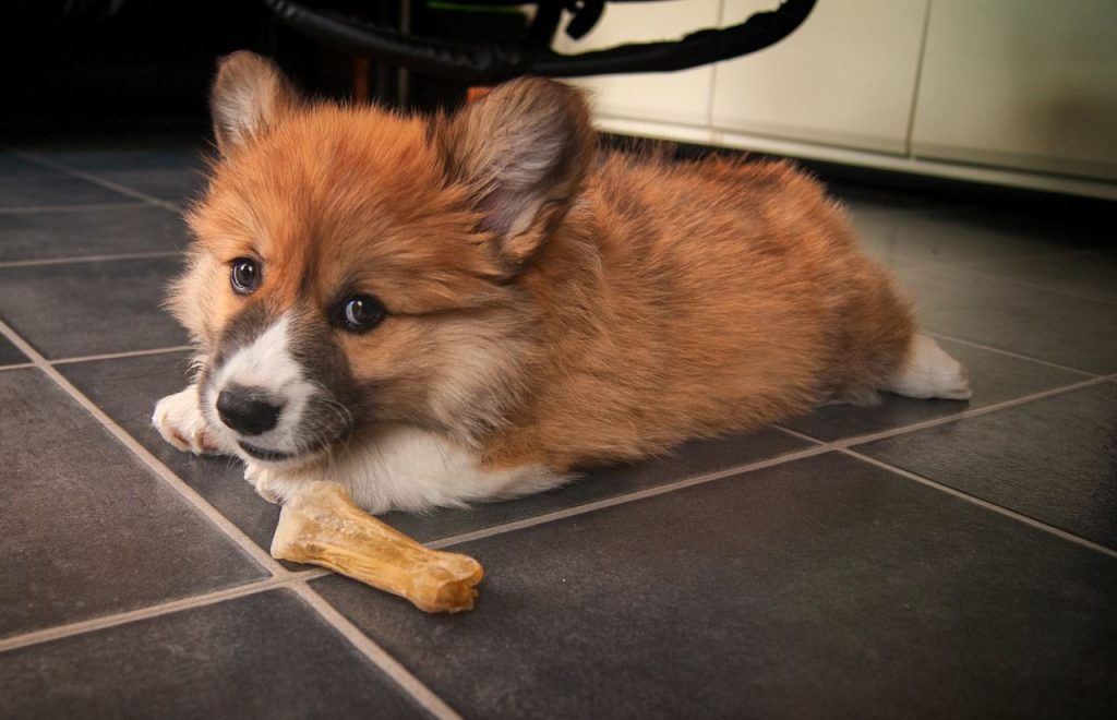 Corgi Puppy Food