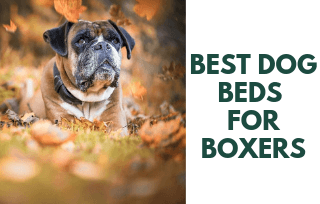 Good Dog beds for Boxers
