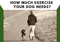 How Much Exercise Your Dog Needs?