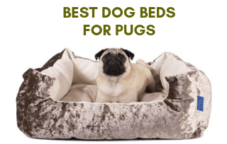 Good bed for pug dog