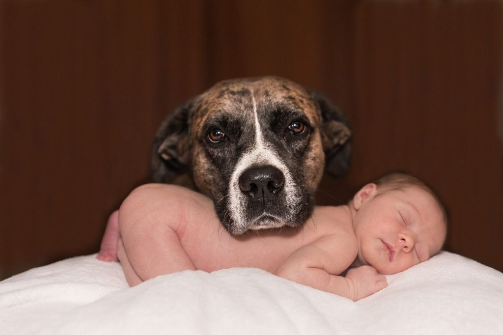 introducing dog to baby