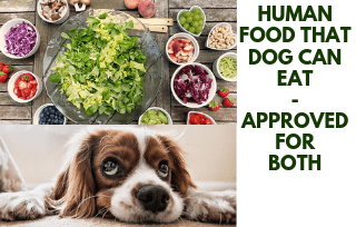 Food that both human and dog can eat
