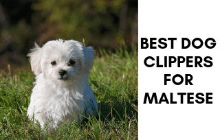Best Clippers For Maltese Dog