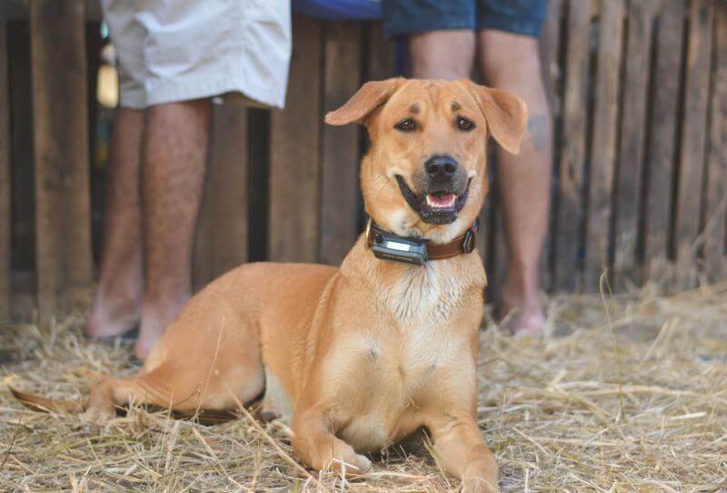 Best dog training collar under 100