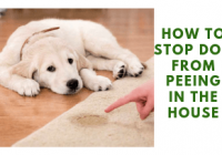 How To Stop A Dog From Peeing In The House