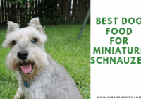 Best Dog Food For Miniature Schnauzer