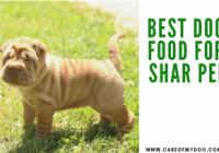 Best Dog Food For Shar Pei
