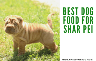 Best Food for Shar Pei