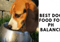 Best Dog Food For Ph Balance & Urinary Tract Health