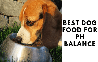 Food for balancing dog ph level