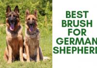 Best Brush For German Shepherd