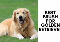 Best Brush For Golden Retriever – With Brushing Tips
