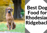 Best Dog Food For Rhodesian Ridgeback-The African Lion Hounds Deserve The Best