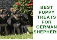 Best Puppy Treats for German Shepherd