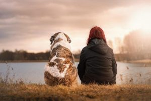 Dog seating beside human near lake