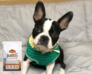 Boston Terrier Food for allergies