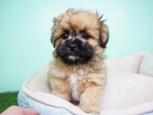 Arizona Shih Tzu & Small Breed Rescue